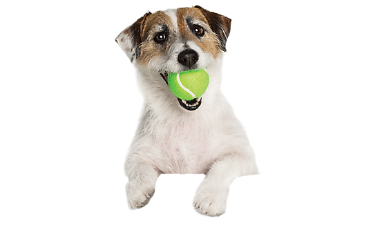 DogWithBall