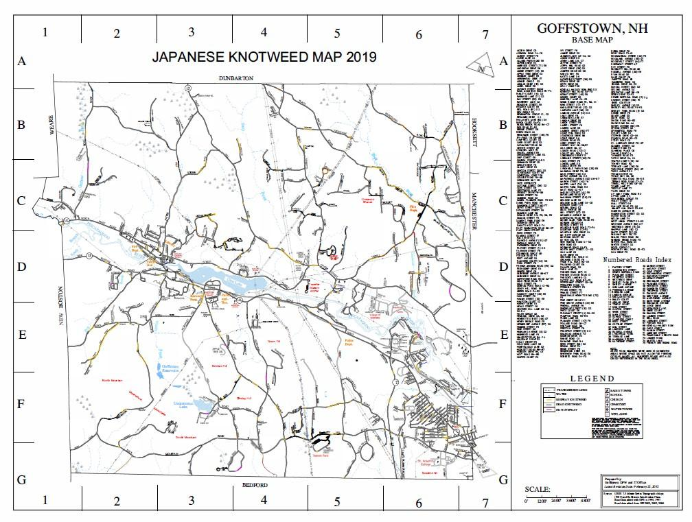 Knotweed Map Fall 20191